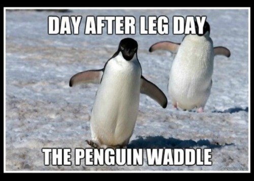 Day after leg day waddle - www.betterwithcake.com