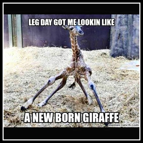 Leg day got me looking like a new born giraffee - www.betterwithcake.com