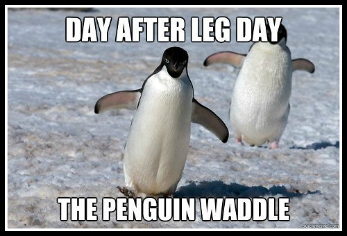 Leg day waddle - www.betterwithcake.com